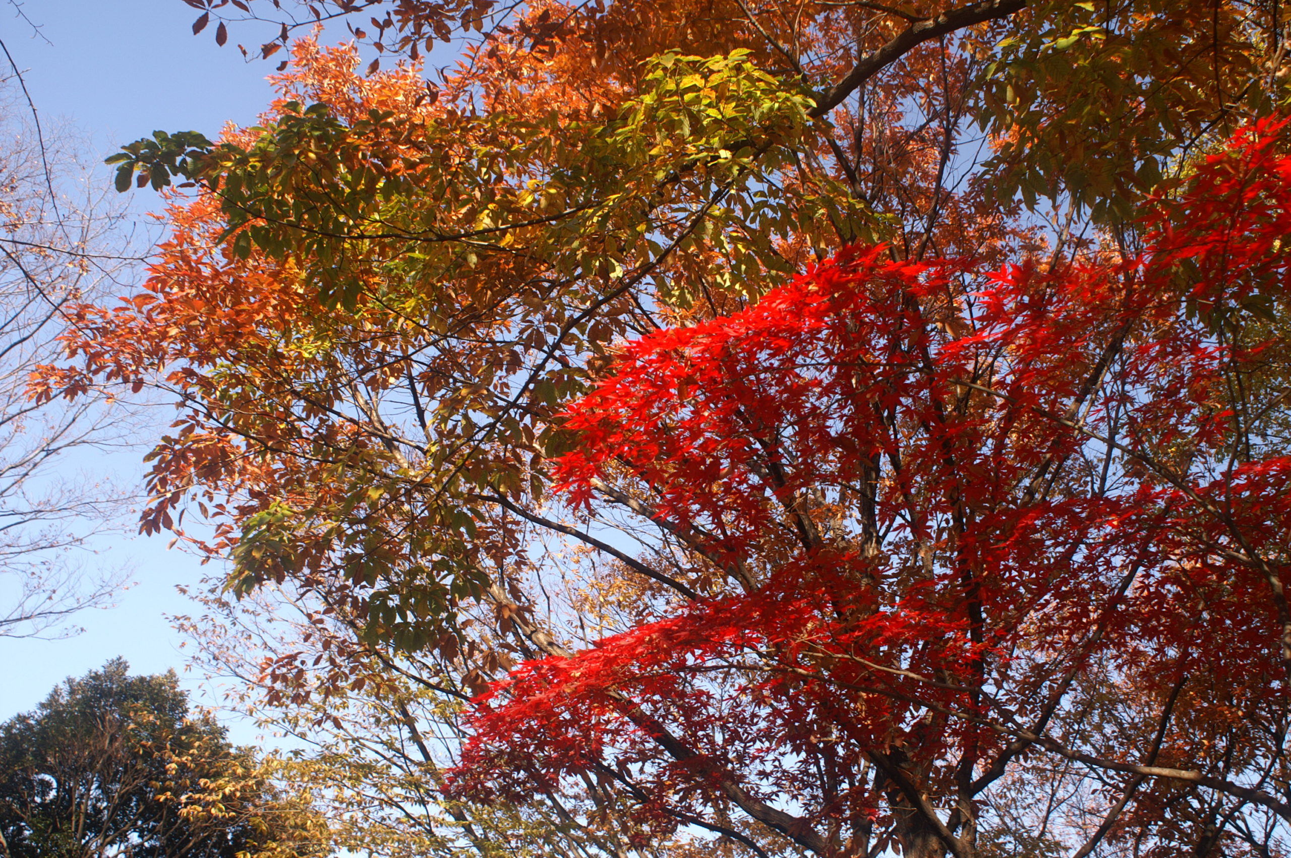 Image showing autumn fall colours in the Heiwa no Mori Park