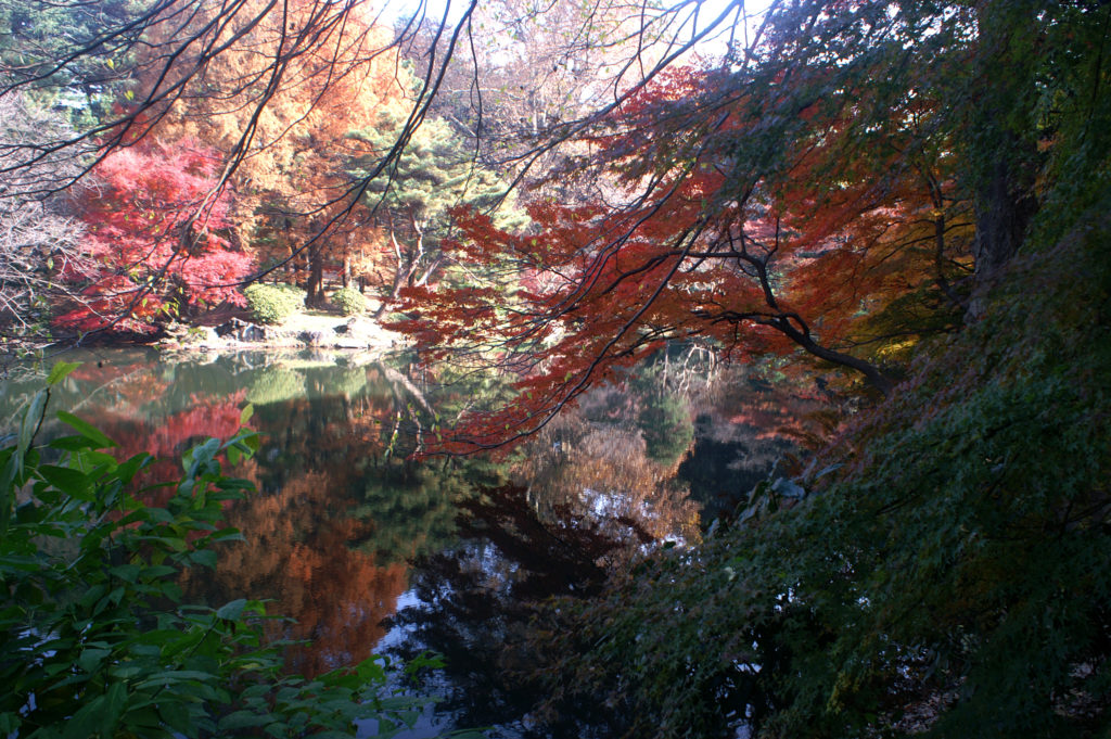 Colourful tree branches reflecting in the pond.