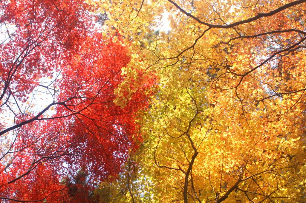 Contrasting foliage colours.