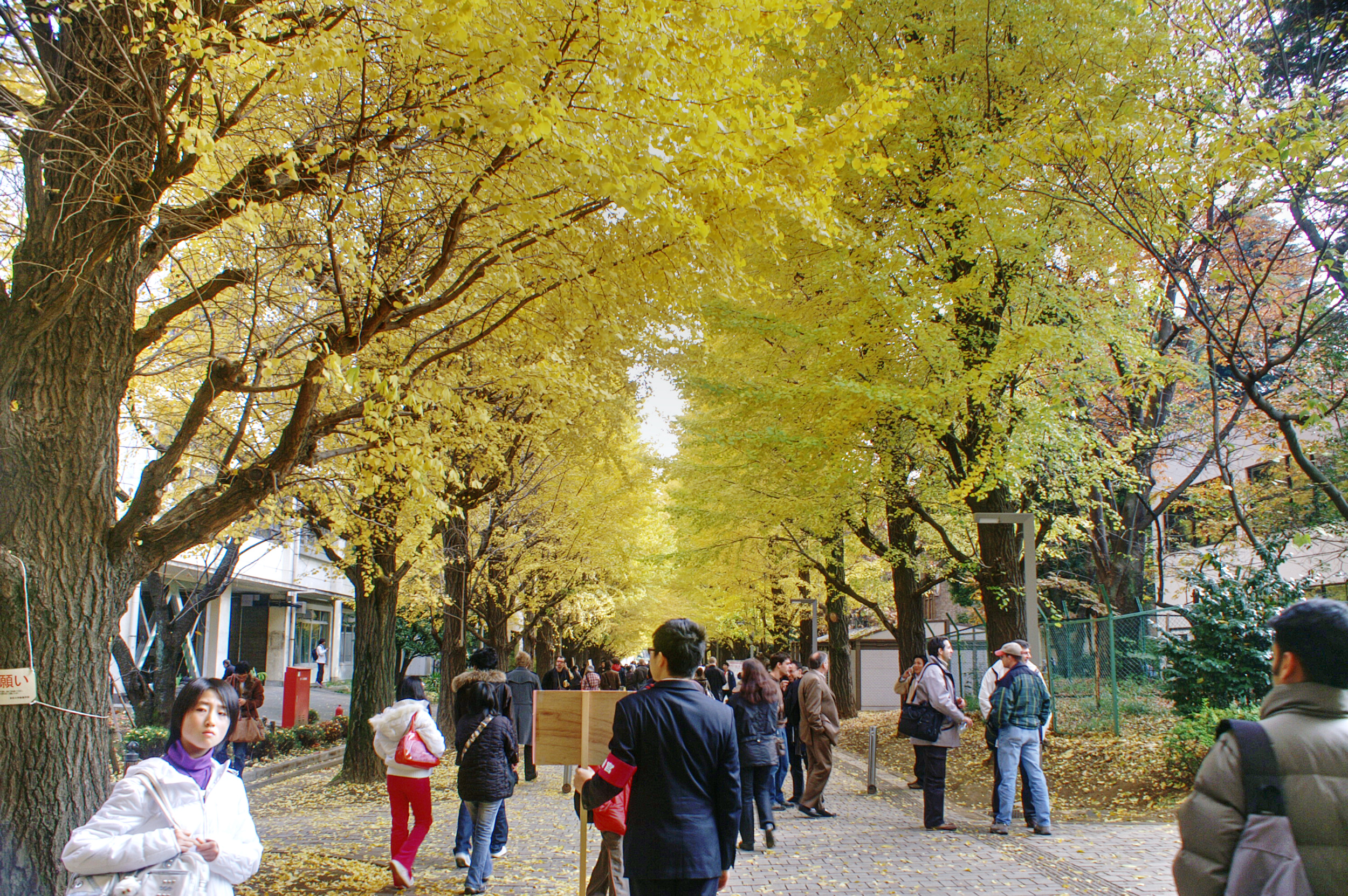 Todai fall colours