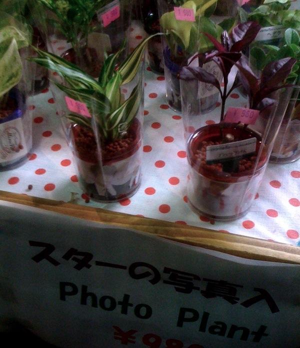 Photo plant